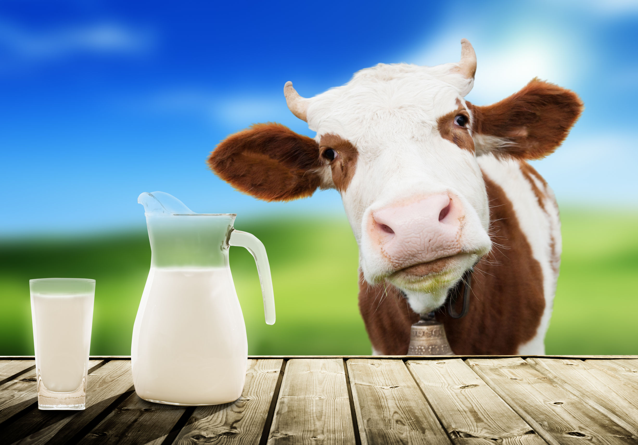 cow-feature