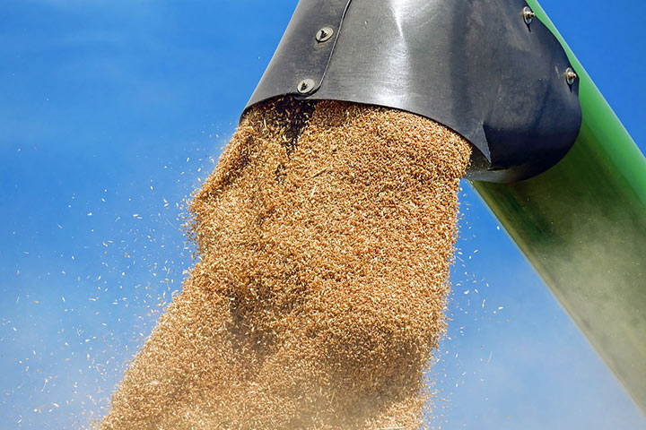 Millets To Take Center Stage In Bengaluru's Trade Fair